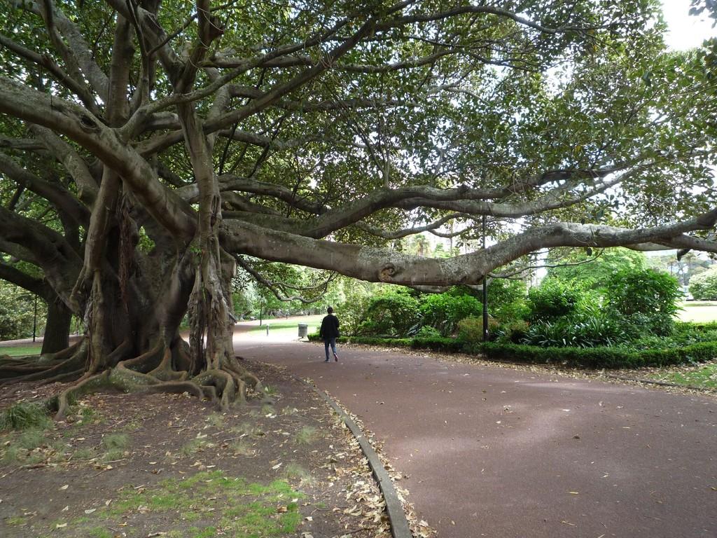 Gardens in Auckland
