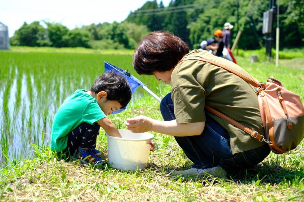 ふれあい自然塾 「田んぼと水路の生きものさがし」
