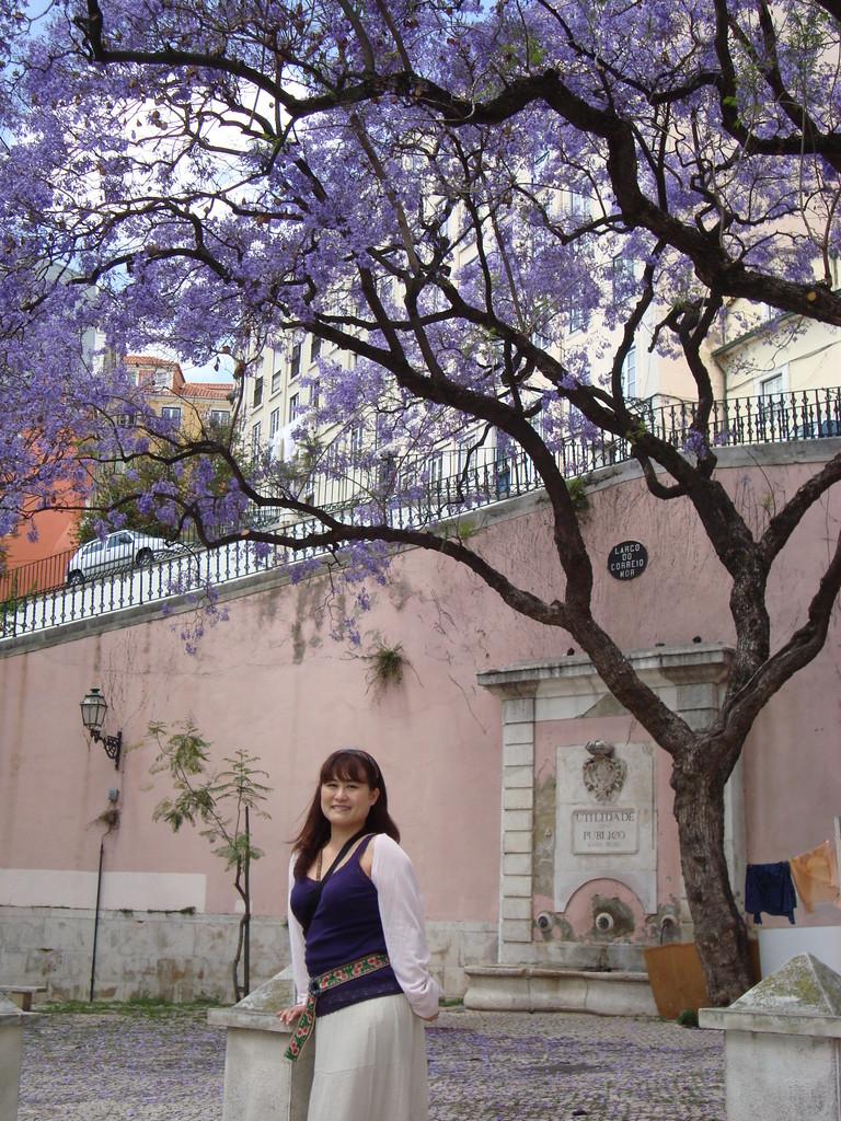 ジャカランダが咲き乱れて美しいリスボンです。