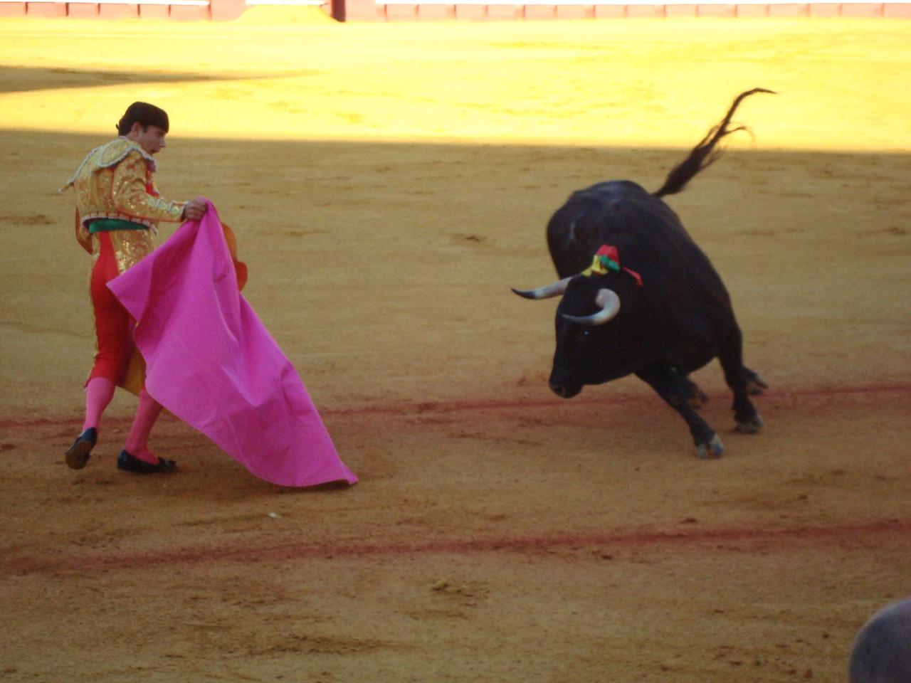 初めての闘牛!ソルイソンブラ席でかぶりつきです。