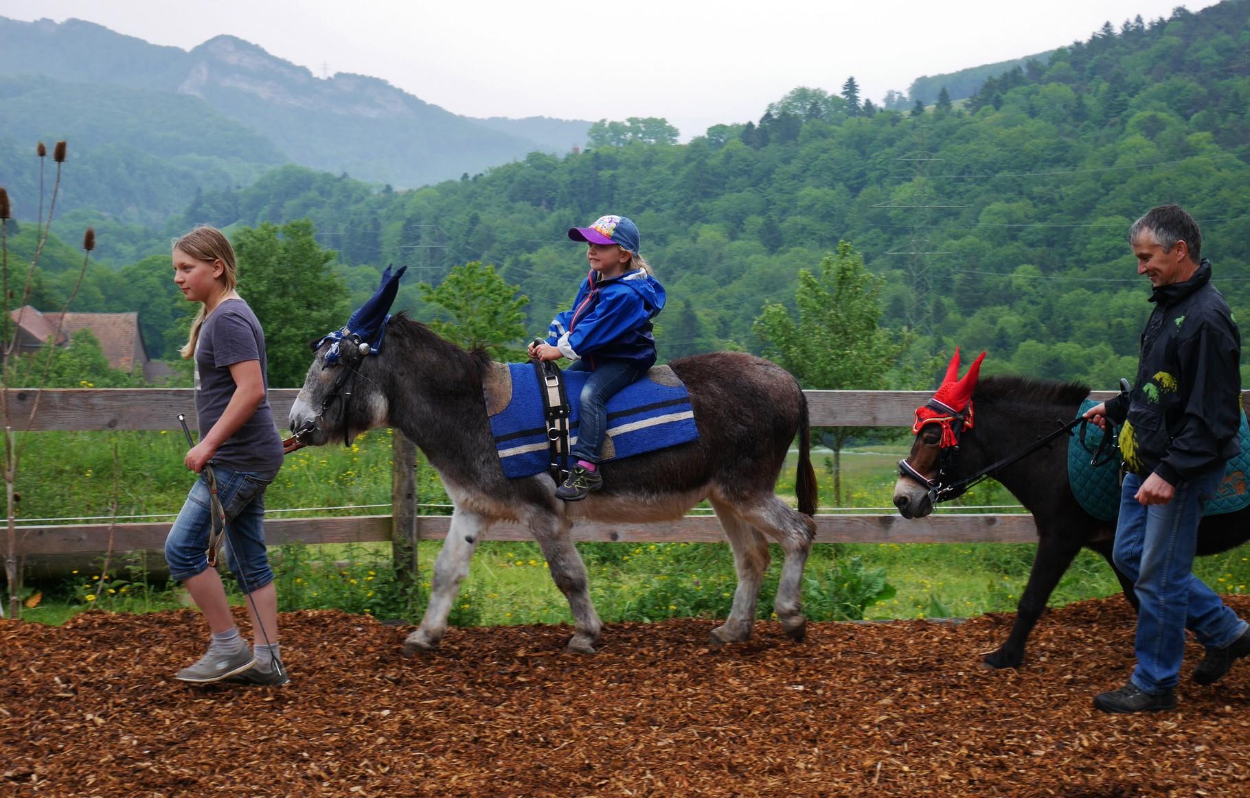Esel und Maultier drehen ihre Runden für die jungen Gäste