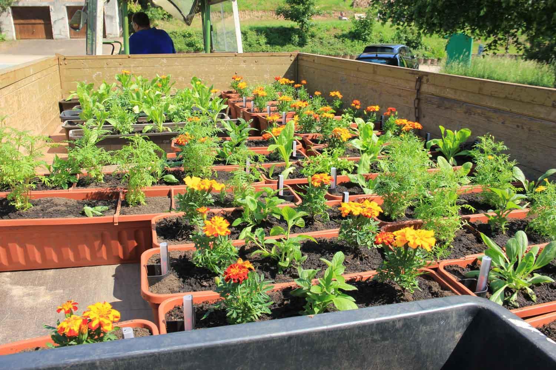 Unser Dorf blüht auf - 70 Blumenkästen aufgehängt