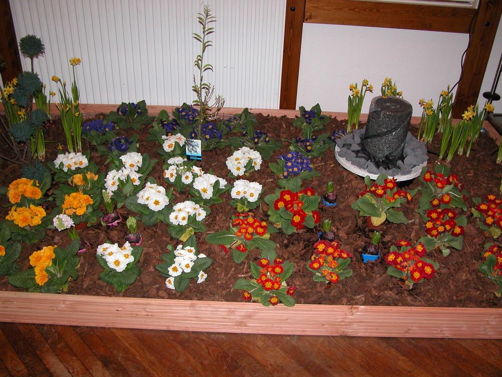 "Frühlingsblumen im Saal ""Ohl's Gasthof""    Foto W. Röndigs"