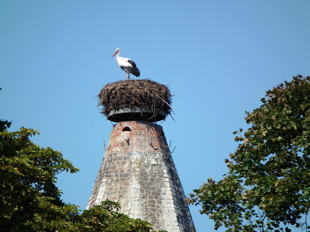Unser Angermünder Storch vom Pulverturm