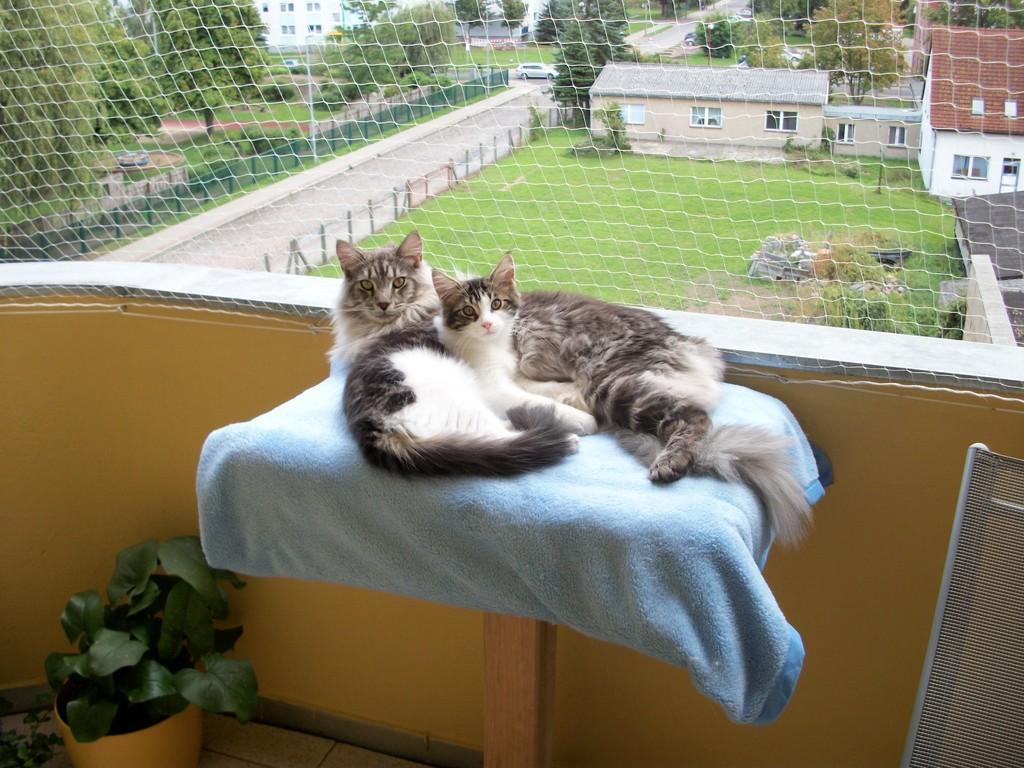 echte Liebe auf dem Balkon