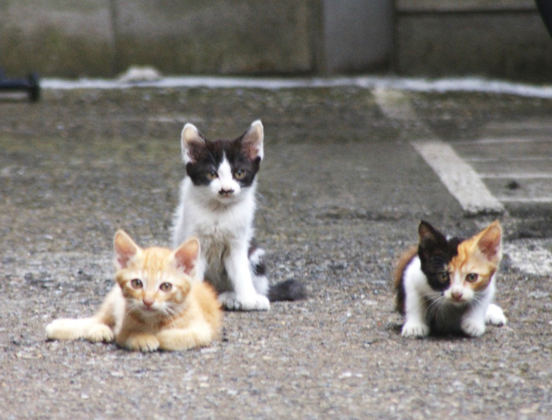 野良猫の赤ちゃん(=^・^=)