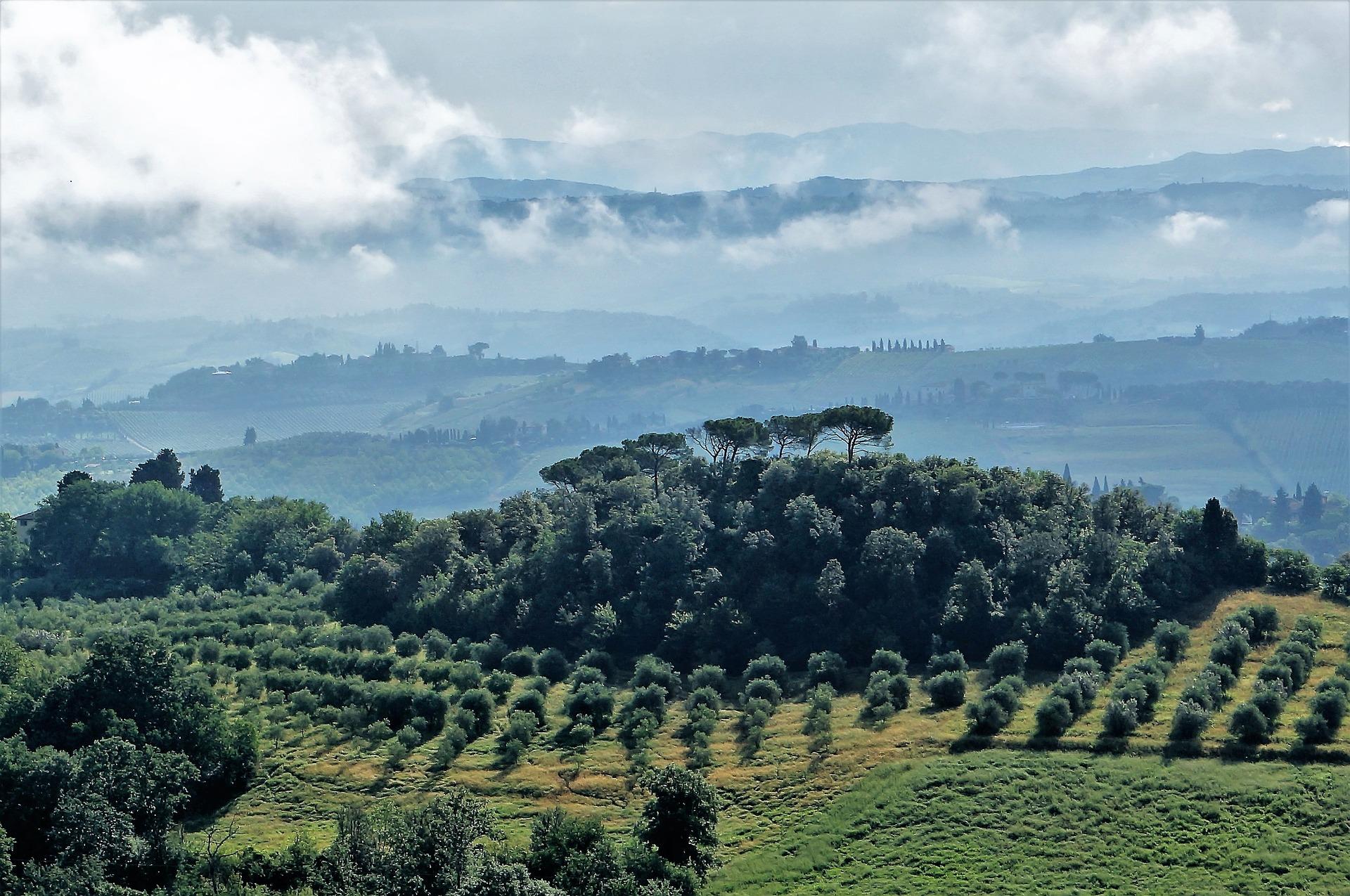 La Toscana, regina dell'Olio Extravergine di Oliva