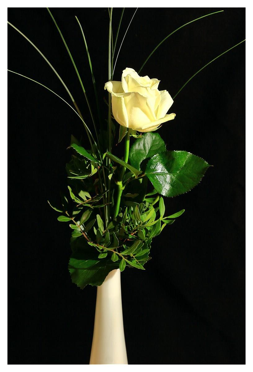 Rose 34. Woche 2015