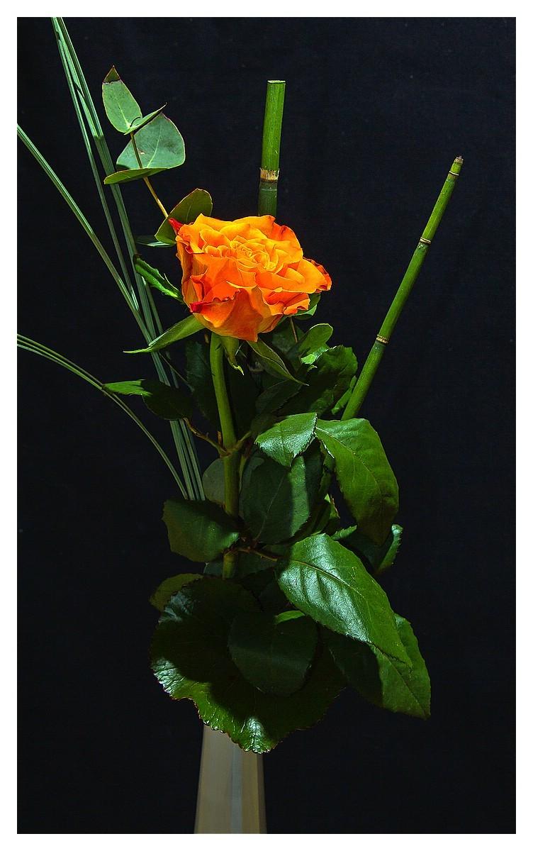 Rose 14. Woche 2016