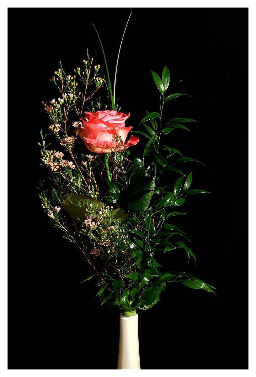 Rose 47. Woche 2015