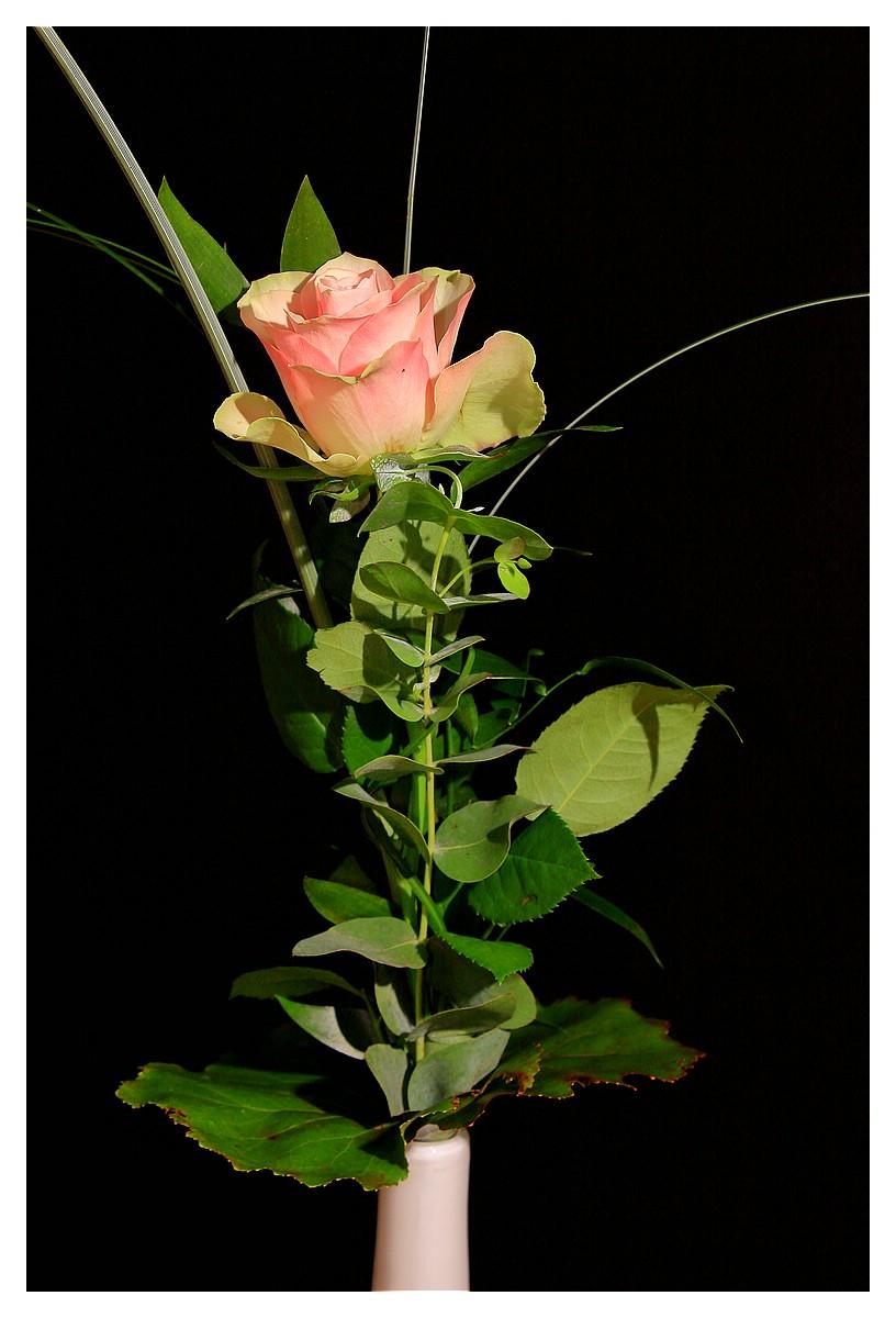 Rose 16. Woche 2016