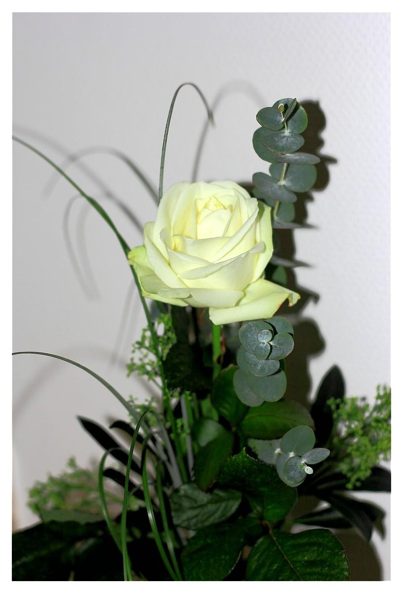 Rose 44. Woche 2015