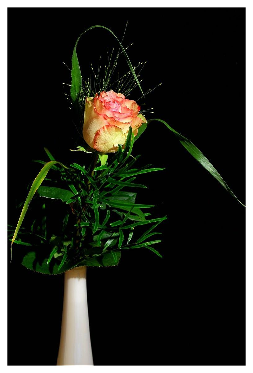 Rose 27. Woche 2015