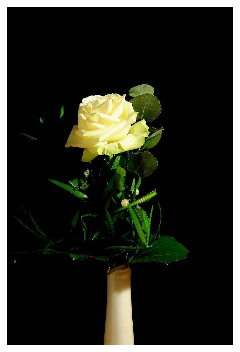 Rose 19. Woche 2015