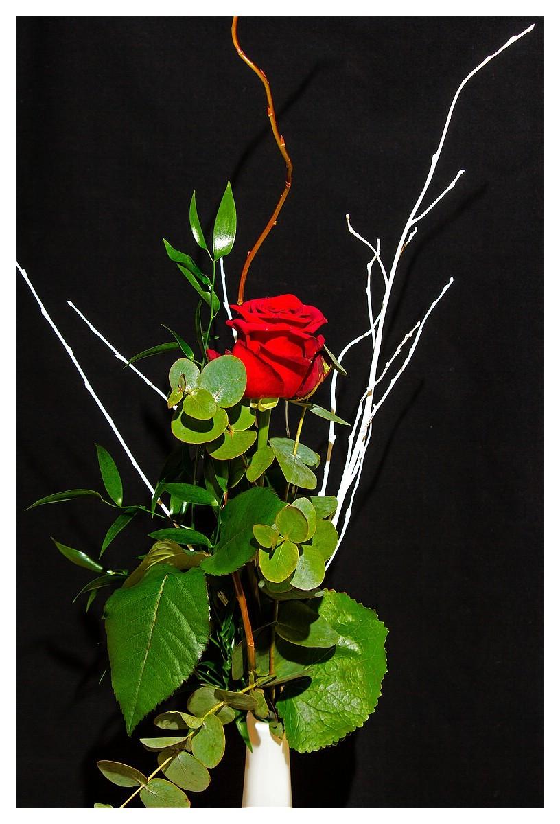 Rose 12. Woche 2015