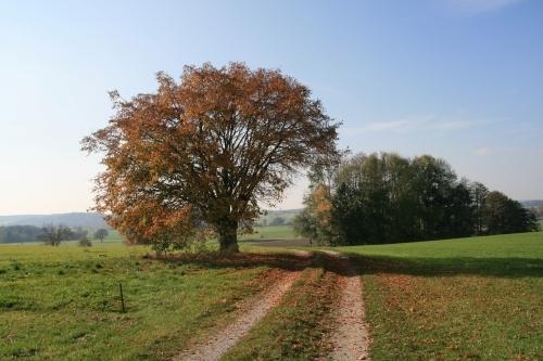 Mein Freund, der Baum im herbstlichen Laub - Ortsteil Hausen
