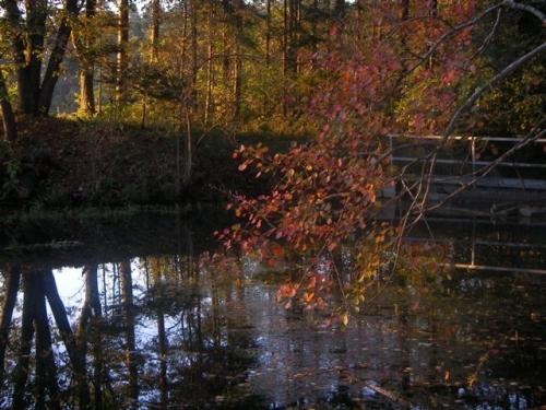 Herbstidylle - Fischweiher bei Salgen
