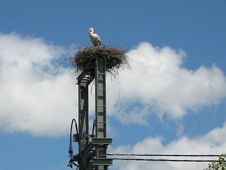 Der Salgener Storch wartet schon auf seine Partnerin