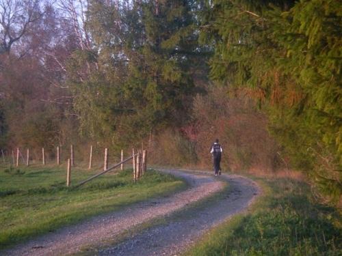 """Einsamer Läufer im """"Moos"""""""
