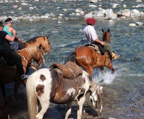 Ein Pferd, ein Pferd - ein Königtreich für ein Pferd
