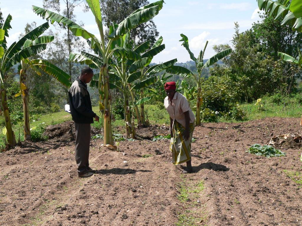 Beratung beim Gemüseanbau
