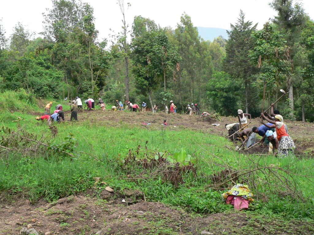 Feldbestellung zur Sojasaatgutproduktion