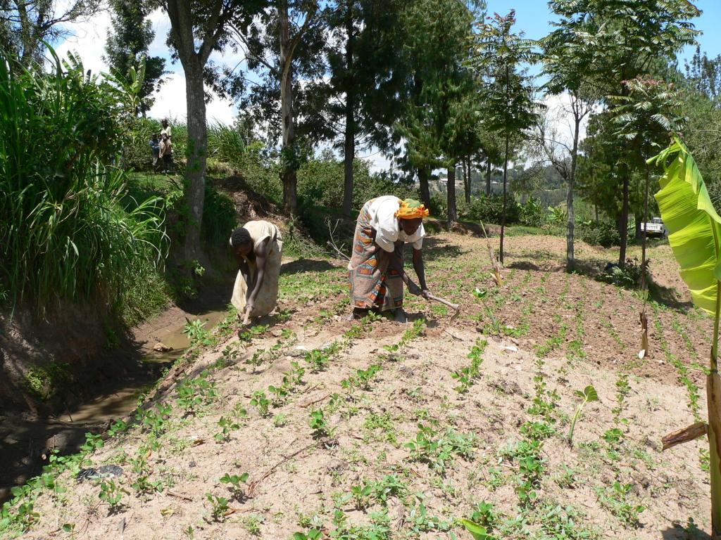 Sojaproduktion in der Projektregion