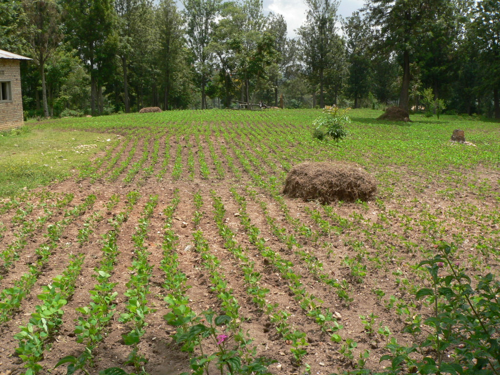 Sojasaatgutproduktion