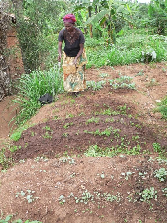 Bewässern der Gemüsepflanzen