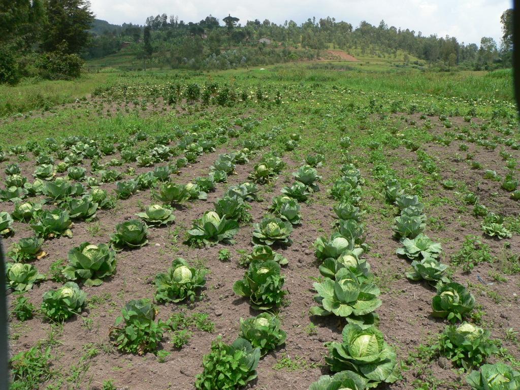 Gemüseanbau am Projekt
