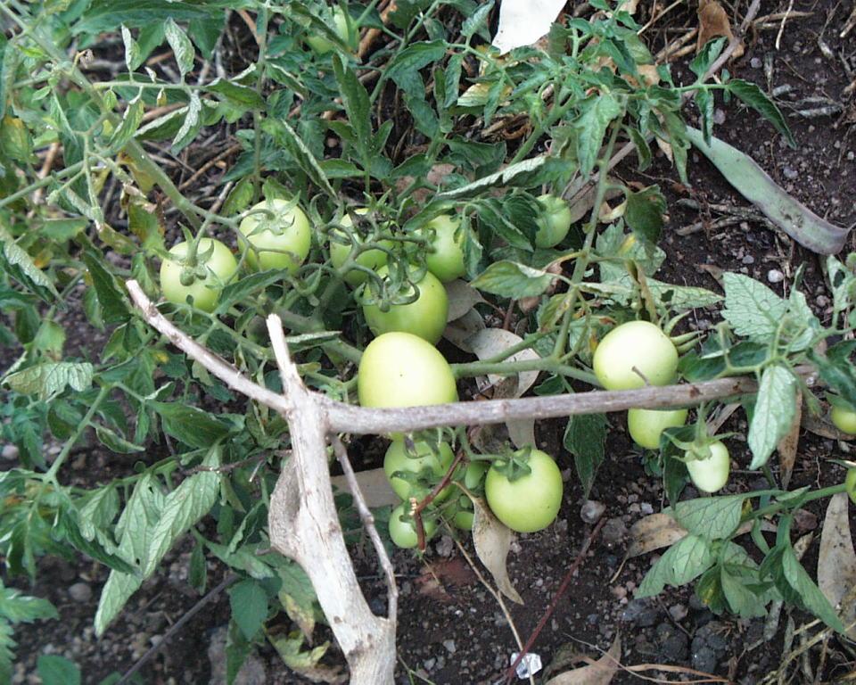 Gemüseanbau beim Bauern