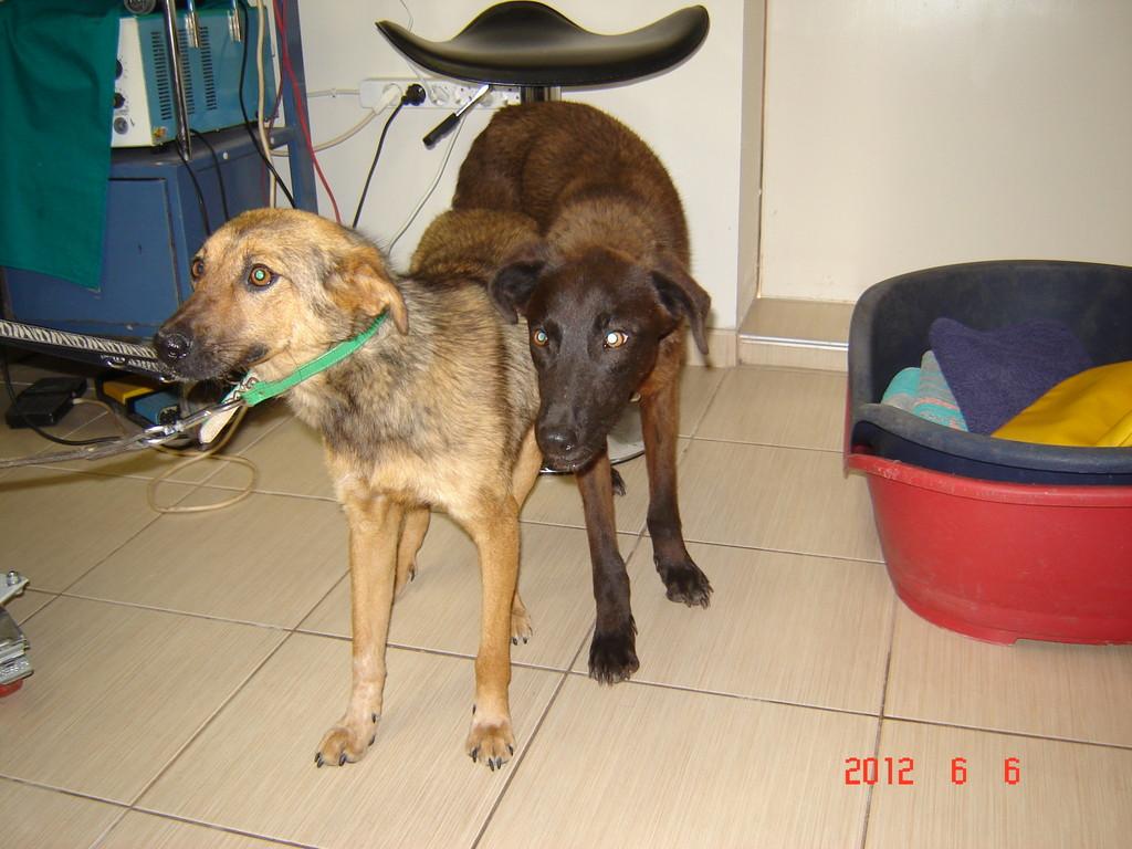 Am 6.Juni ging es dann mit Kala und Dala weiter (Schwestern von Roni und Tschernjo)
