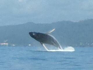 ...pausieren beim Whale-Watching!