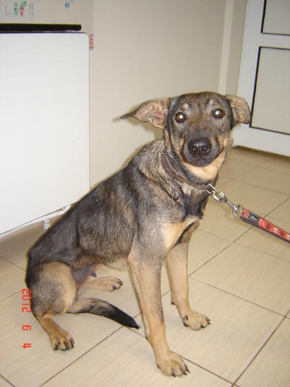 ..und nun beim Tierarzt, zum Kastrieren! (04.Juni 2012)