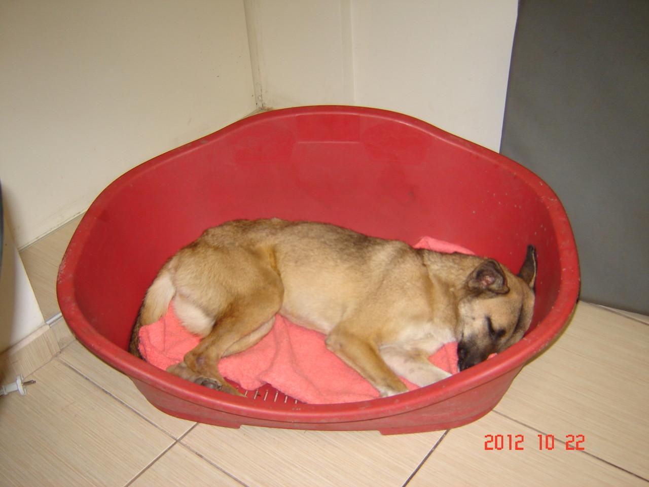 """...und hier schläft sie bereits ihren """"Rausch"""" aus!"""