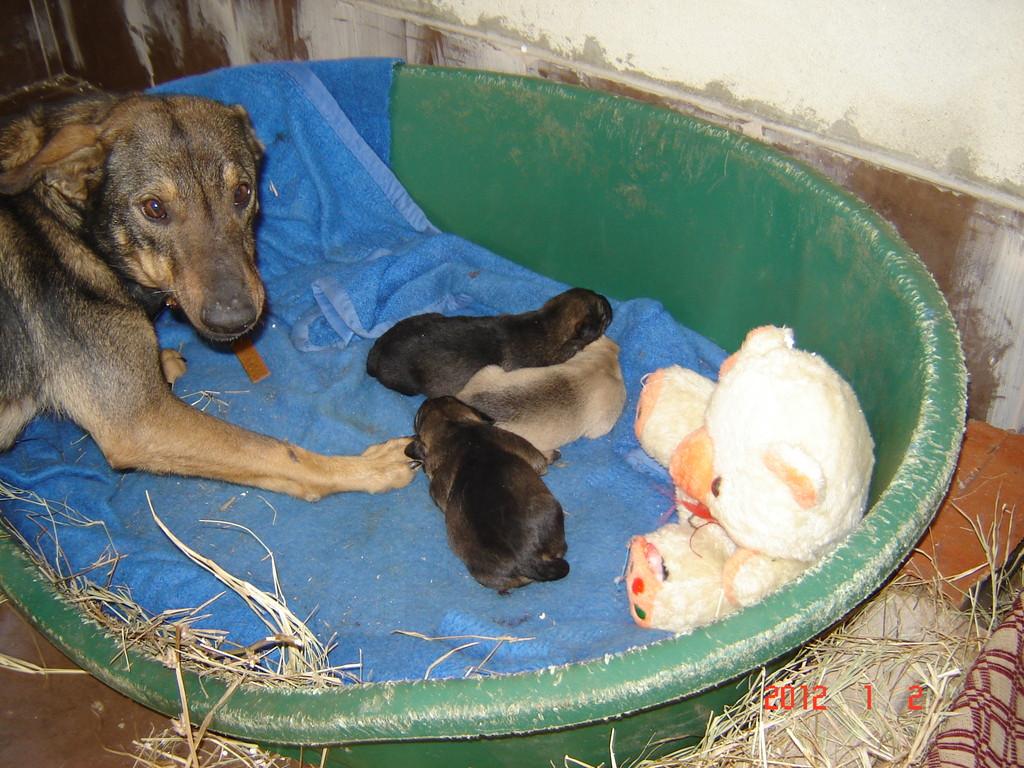 Am 26.12.2011 noch 3 fache Mama geworden...