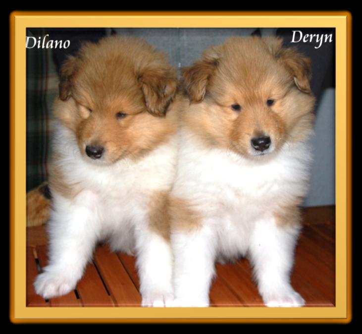 Deryn und Brüderchen Dilano.
