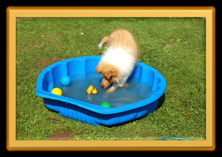 Deryn - im Wasser - 11 Wochen alt.