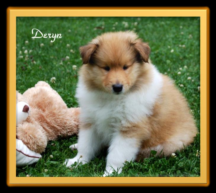 Deryn -6 Wochen alt.