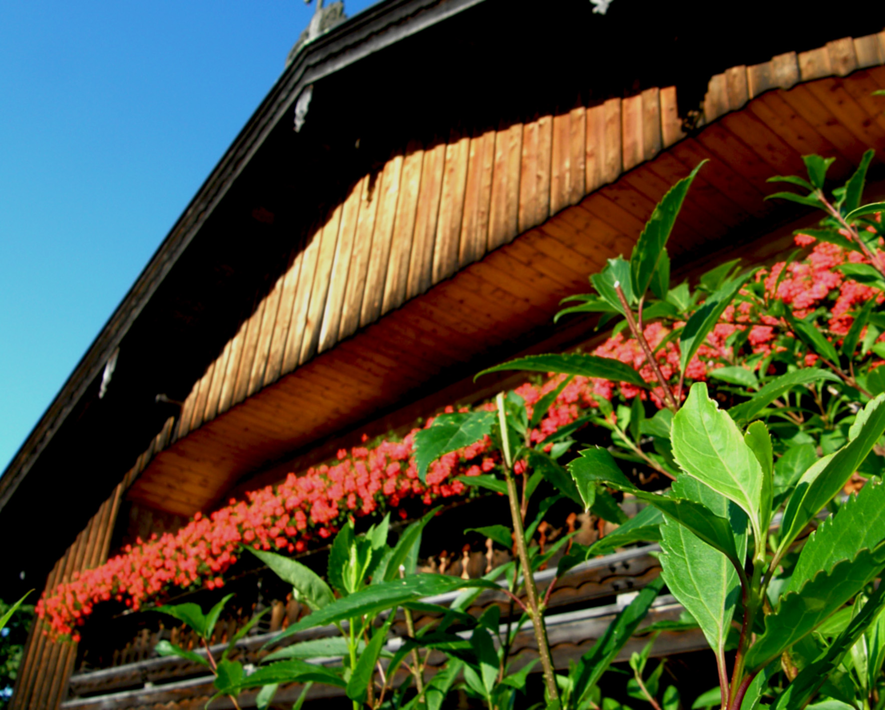 Sommerliche Stimmung im Trachtenheim Irschenberg