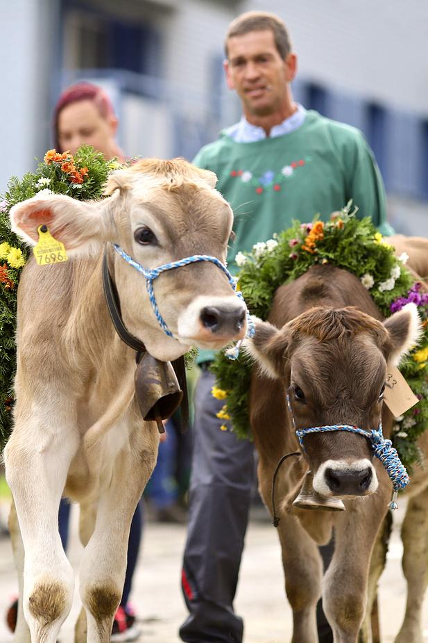 foto-aldente.net - Brunnadern - Viehschau - Fotografie - Tierfotografie