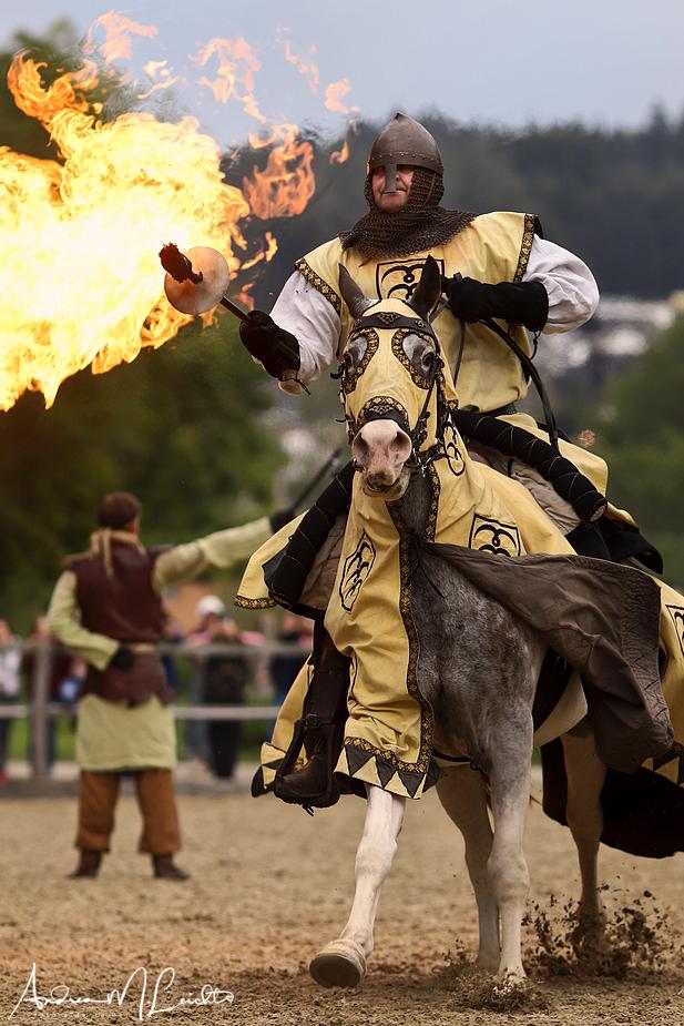foto-aldente.net - Fotografie Mittelalterliches Hof-Spektakel zu Wil - Ritterturnier - Tierfotografie