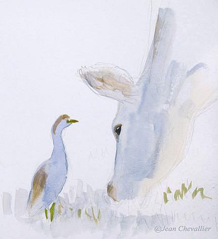 Héron garde-boeuf (bubulcus ibis) aquarelle Jean Chevallier
