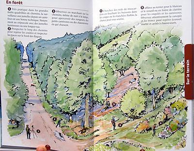 """Double-page """"forêt"""" pour apprendre à chercher et observer dans ce milieu"""