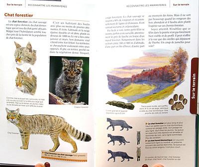 """Double-page """"chat forestier"""" avec comparaison chat tigré/chat sauvage notamment"""