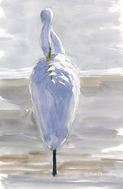 grande aigrette egretta alba Jean Chevallier