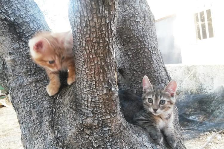 MARLO & SAPHIRE