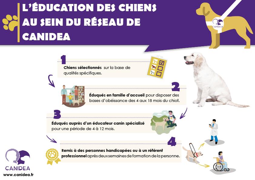 L'éducation des chiens d'aide à la personne