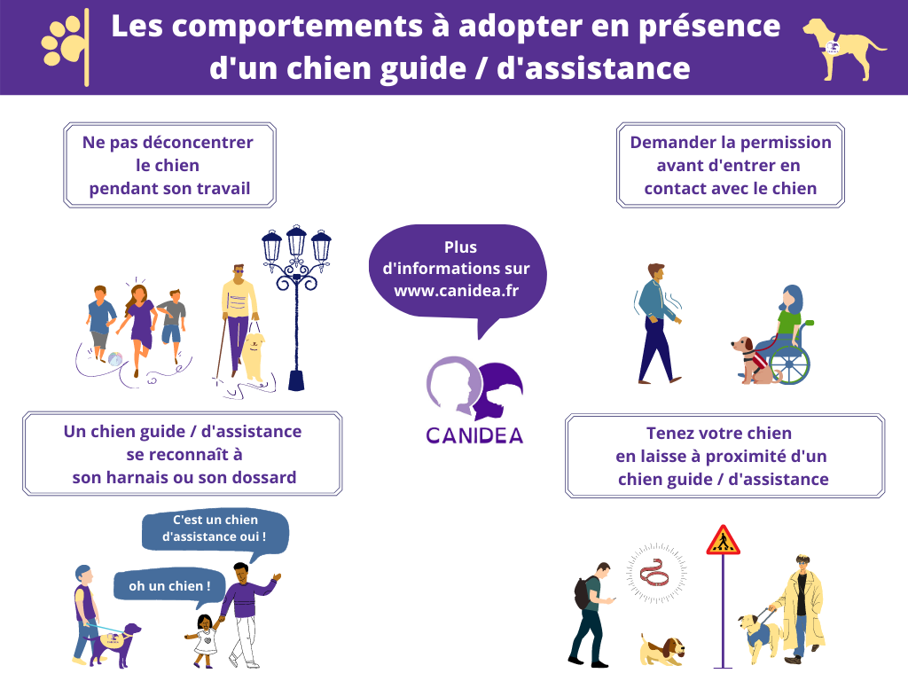 Les comportements à adopter en présence d'un chien guide - d'assistance