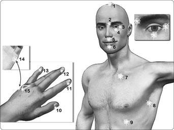 die 15 Akupunkturpunkte, die bei EFT beklopft werden